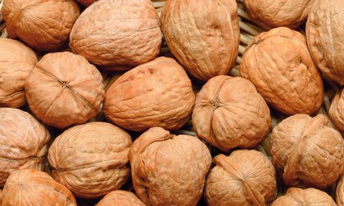 Shelled  Walnut